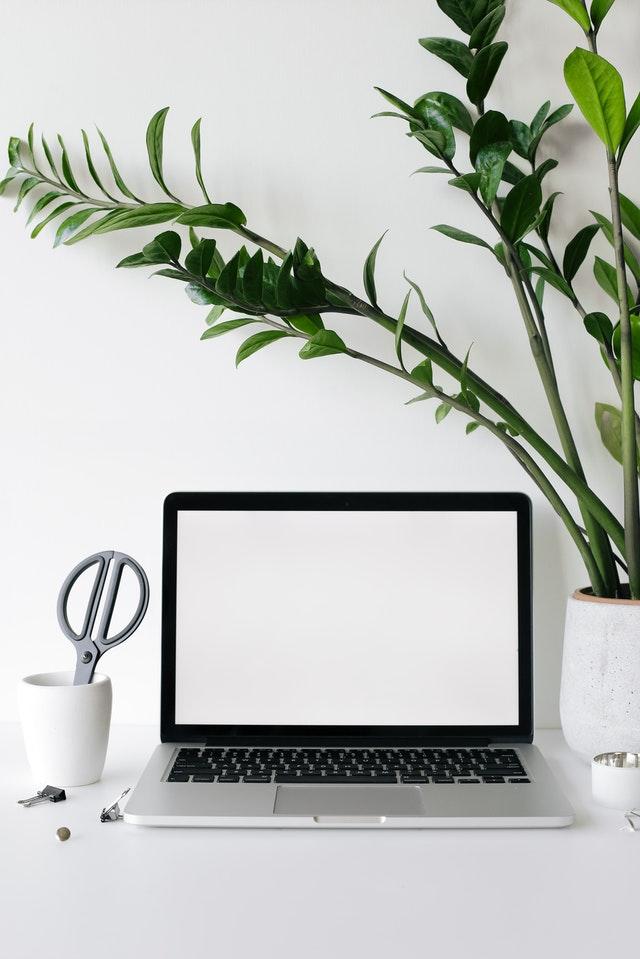 Počítač s rostlinou