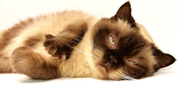 hezká kočka
